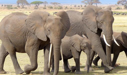 Een visum aanvragen voor uw reis naar Kenia (e-visum)