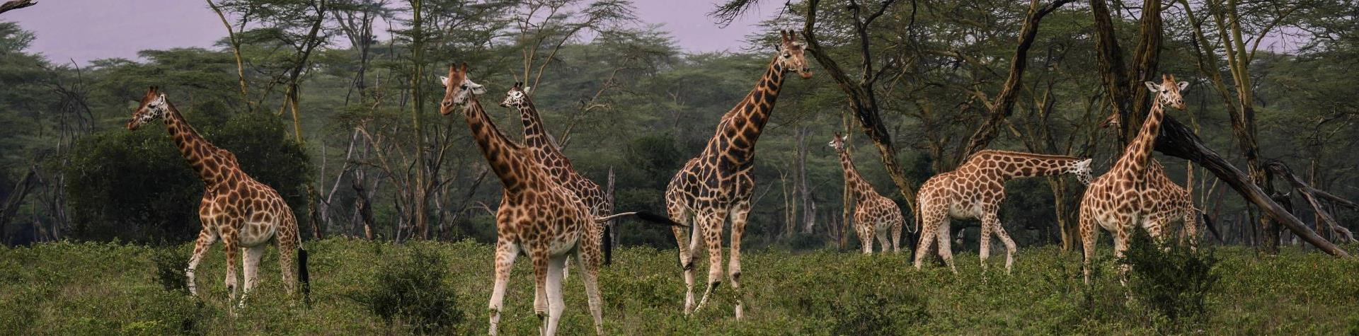 YourVisa | Visum aanvragen Kenia