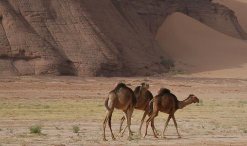 Een visum aanvragen voor uw reis naar Algerije