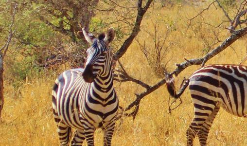 Een visum aanvragen voor uw reis naar Tanzania (e-visum)