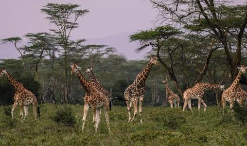 Een visum aanvragen voor uw reis naar Kenia